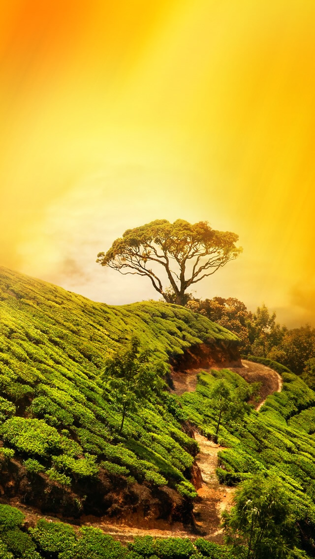 Nature Tree On Mountain Top iPhone wallpaper