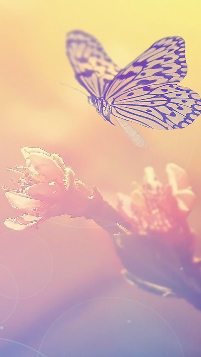 Fairy Blur Flower Butterfly Iphone Wallpapers Free Download
