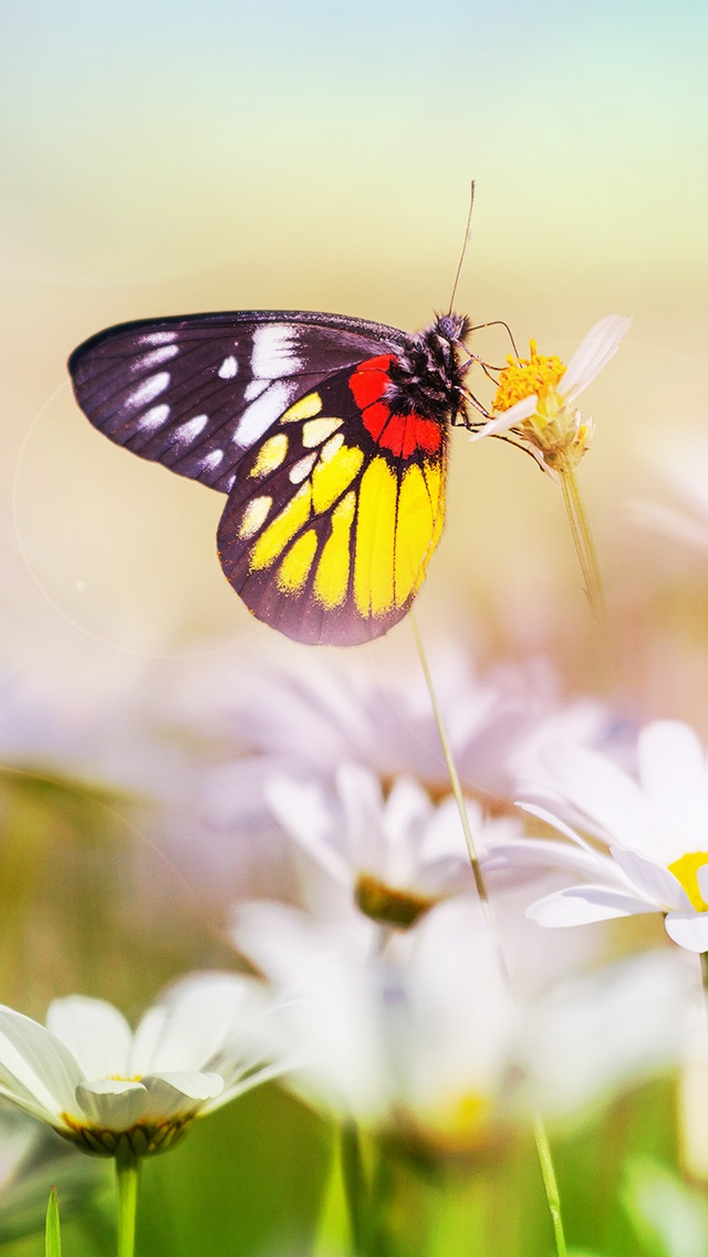 Aesthetic Butterfly On Flower Iphone Wallpapers Free Download