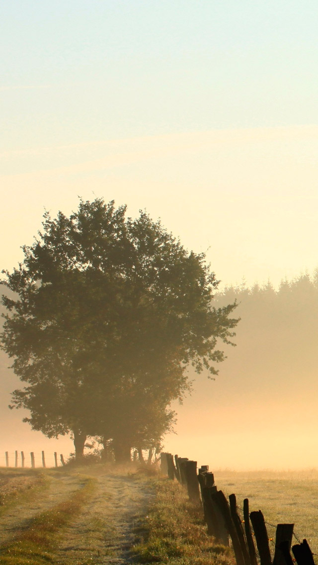Foggy morning iPhone wallpaper