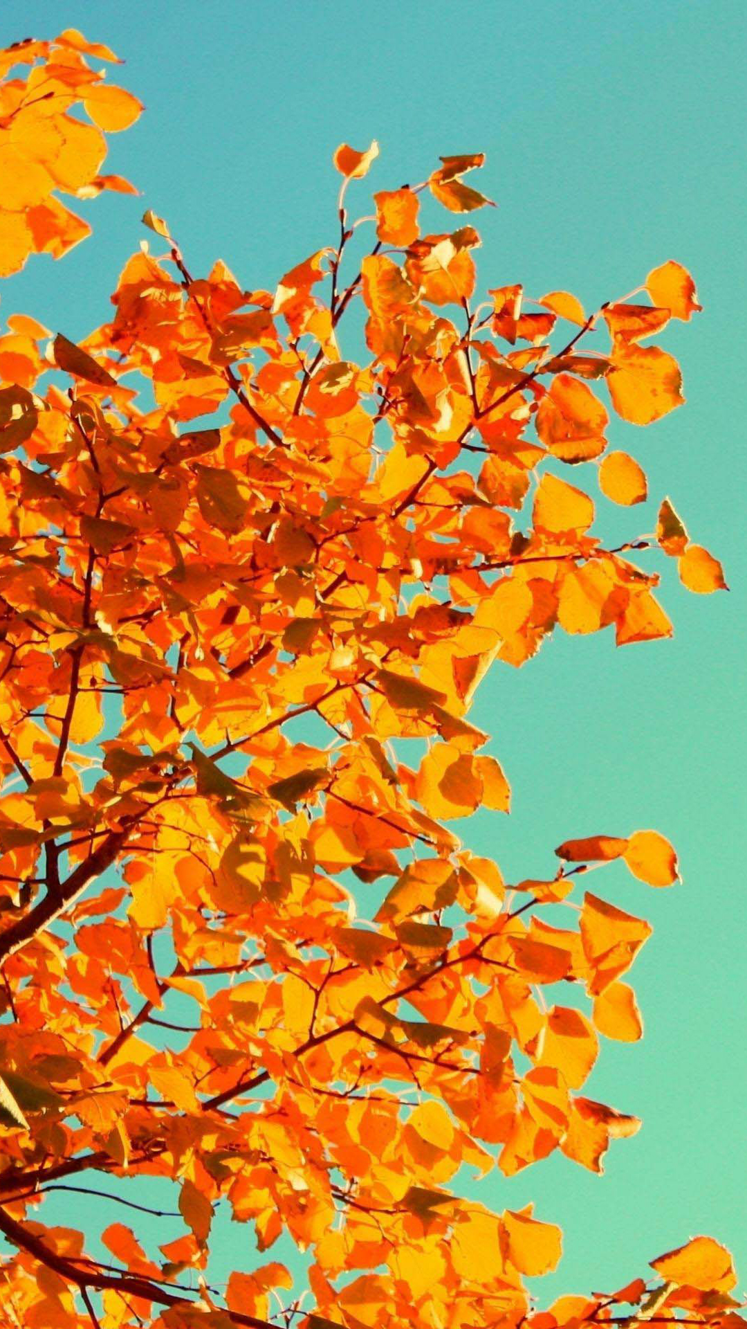 Fall Tree Art iPhone wallpaper