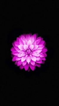 Best Lotus Iphone Wallpapers Hd Ilikewallpaper