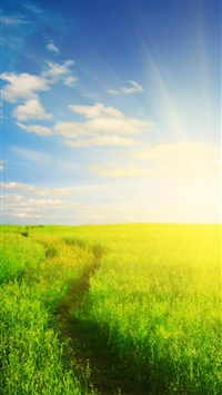 Nature Sunshine Grassland Field iPhone wallpaper
