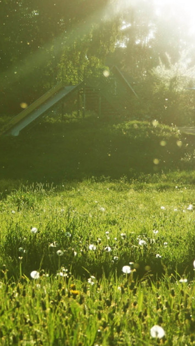 Sunny Day Grassland Iphone Wallpapers Free Download