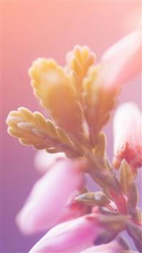 Macro Bokeh Flower Bunch iPhone 5s wallpaper