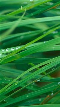 Plant Dew Leaf Macro iPhone 5s wallpaper