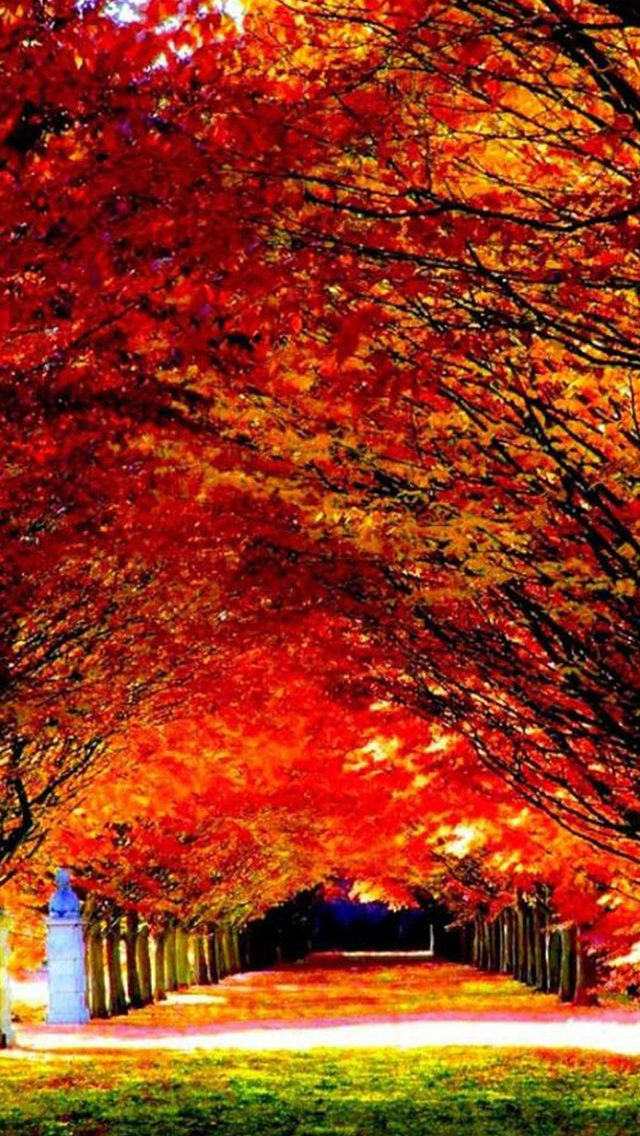 Autumn Red Tree Road iPhone wallpaper