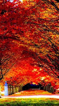 Autumn Red Tree Road iPhone 5s wallpaper