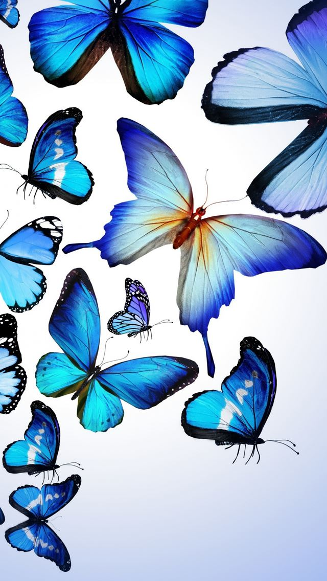 Blue Butterfly Drawing Art Beautiful Iphone Wallpapers Free