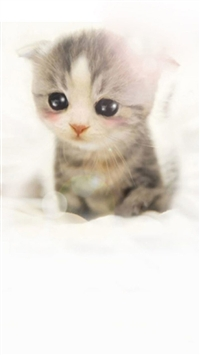 Cute Scottish Fold Kitten iPhone 5s wallpaper