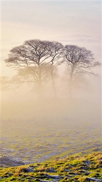 Lonely Tree In Mist iPhone 5s wallpaper