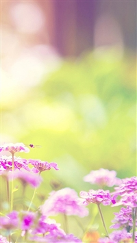 Nature Sunny Pink Flower Bokeh iPhone 5s wallpaper