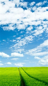 Nature Green Farming Land Blue Skyscape iPhone 5s wallpaper