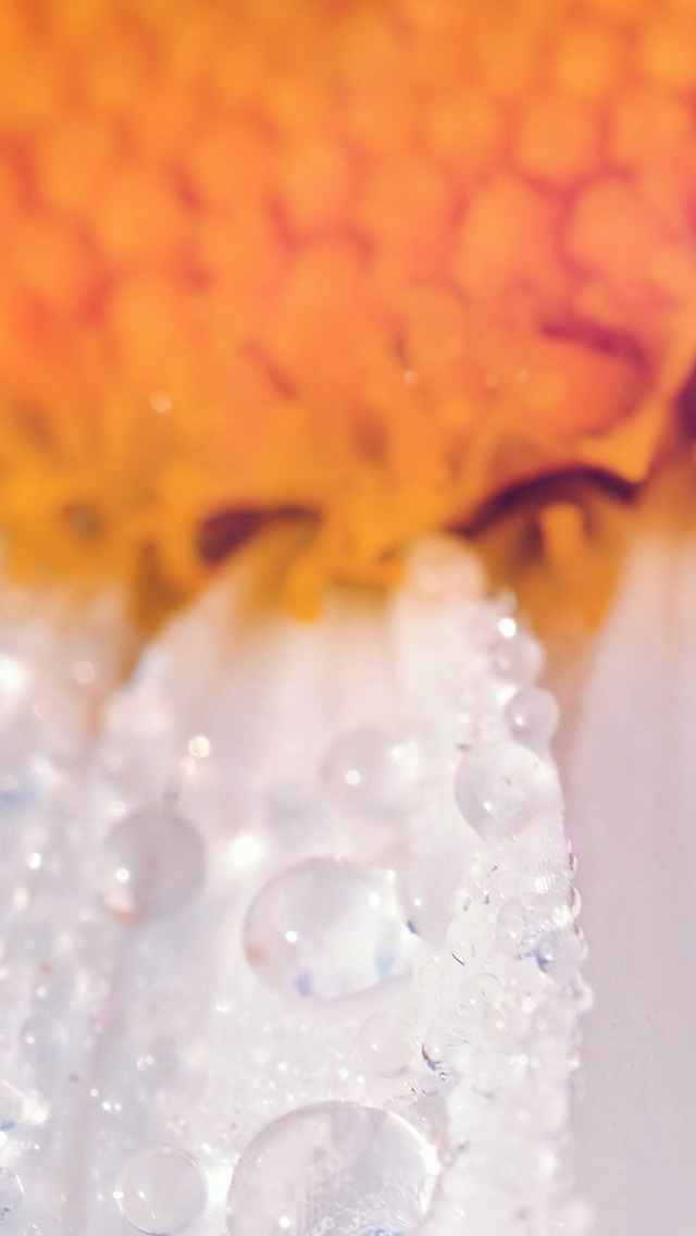 Flower Raindrop Orange Nature Macro iphone wallpaper ilikewallpaper com