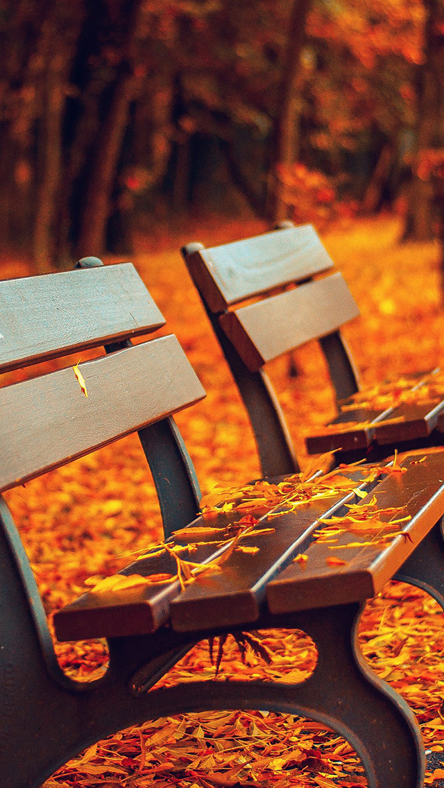 Nature Autumn Leaf On Park Bench iPhone wallpaper