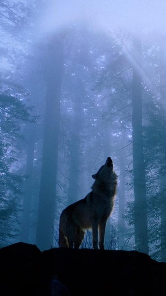 Twilight Foggy Forest Wolf Howl Iphone Wallpapers Free Download