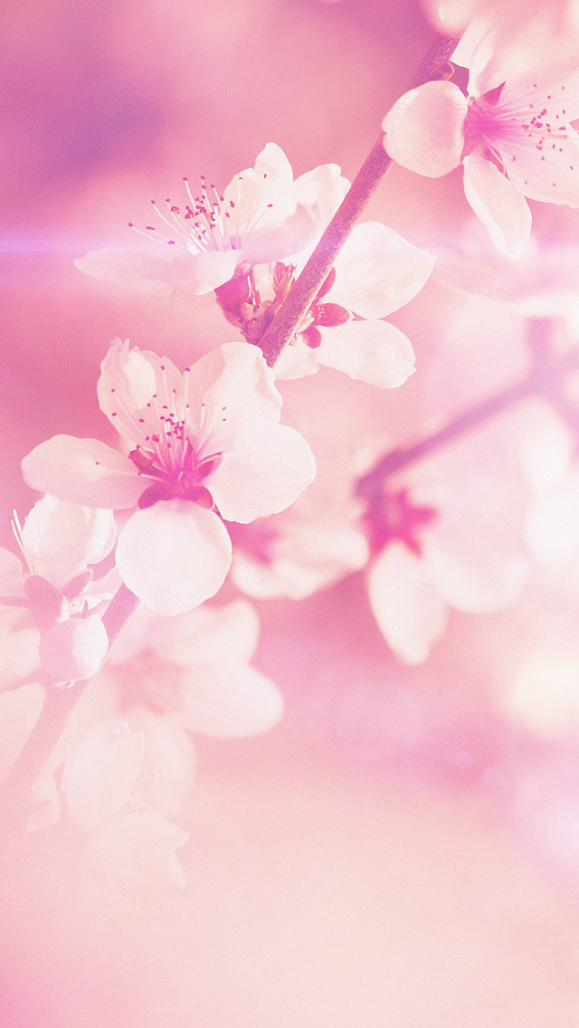 Flower Pink Cherry Blossom Flare Nature iPhone wallpaper