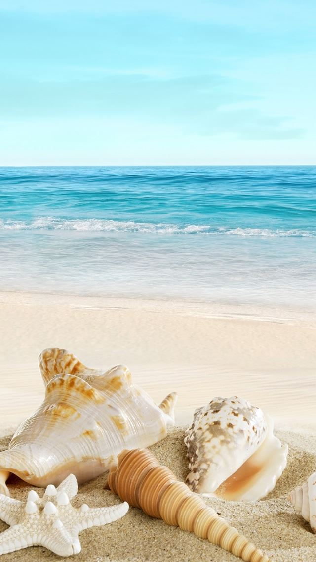 Nature Sunny Ocean Seaside Beach Shells iPhone wallpaper
