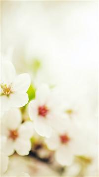 Blossom Cherry Spring Sakura Nature Flower Bokeh iPhone 5s wallpaper