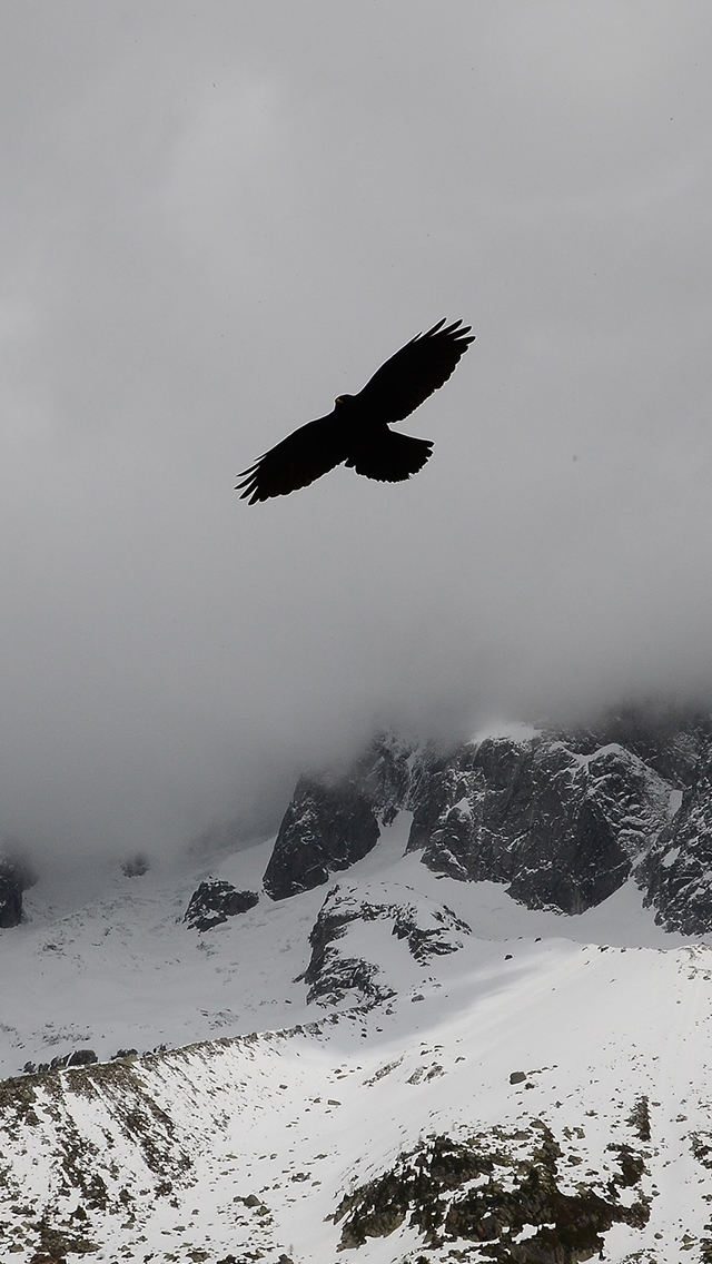 Eagle Flying Over Nature Winter Snowy Mountains iPhone wallpaper