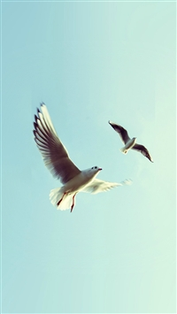 Pigeons Bird Fly Sky Animal Nature Minimal iPhone 5s wallpaper