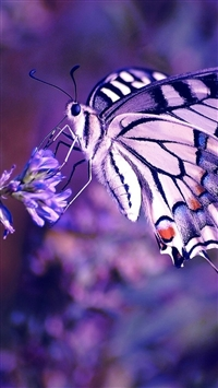 Butterfly On Flower At Dusk iPhone 5s wallpaper