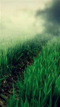 Country Foggy Twilight Grass Leafy Field Path iPhone 5s wallpaper