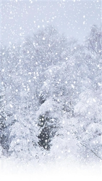 Heavy Snow Pine Tree Forest Landscape iPhone 5s wallpaper