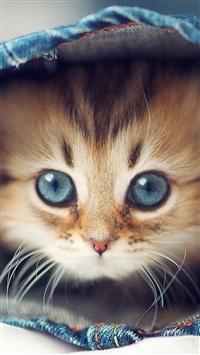 Macro Cute Cat In Jaen Pants iPhone 5s wallpaper
