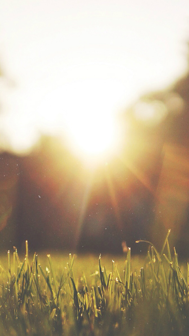 Nature Front Yard Sunshine iPhone wallpaper