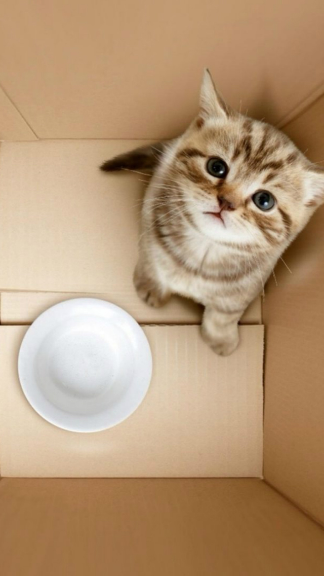 3D Dimensional Box Poor Kitten Bowl Begging iPhone wallpaper