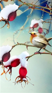 Nature Snowy Branch Plant Bird Landscape iPhone 5s wallpaper