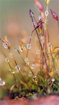 Natural Dew Plant Blur Bokeh iPhone 5s wallpaper