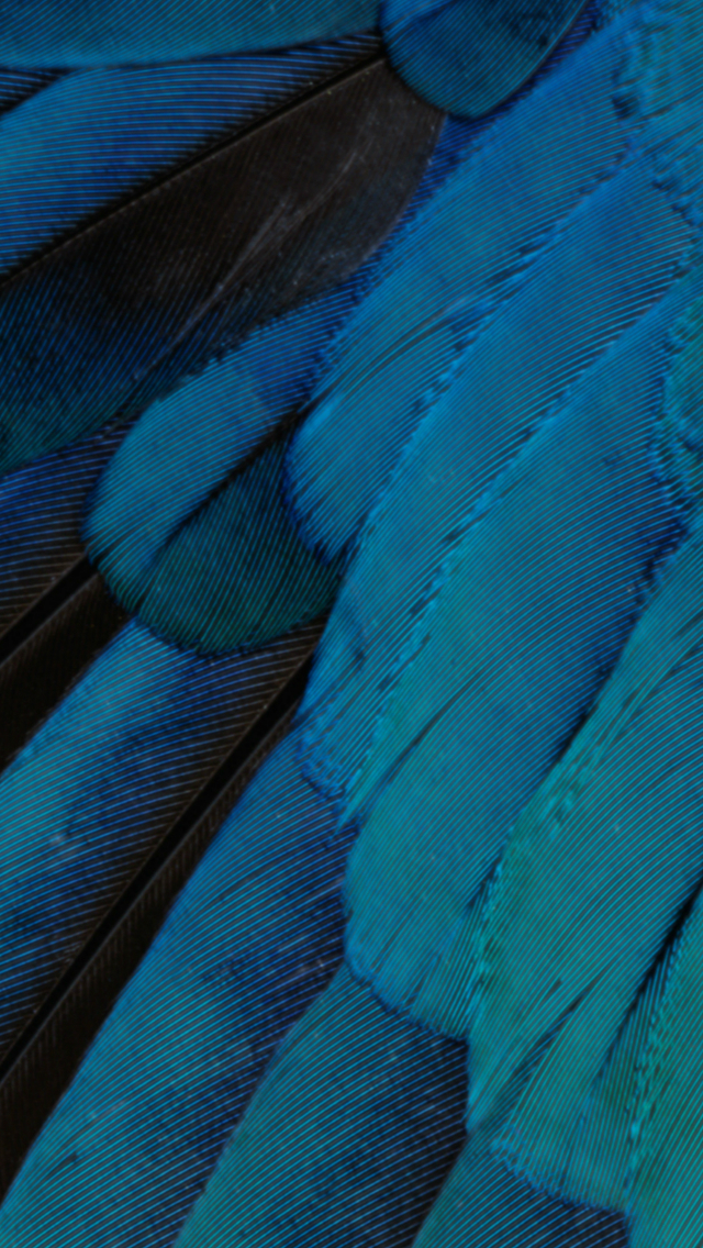 IOS9 Wallpaper Fantasy Feather Pattern Art iPhone wallpaper