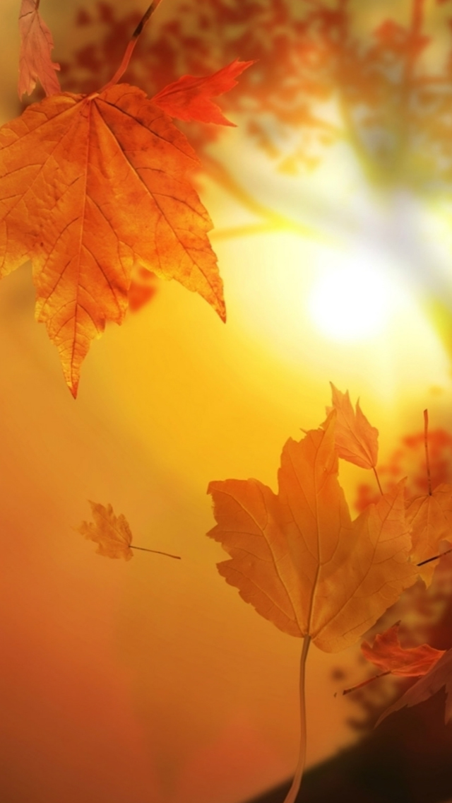 Beautiful Autumn Falling Yellow Leaves Sunshine Iphone