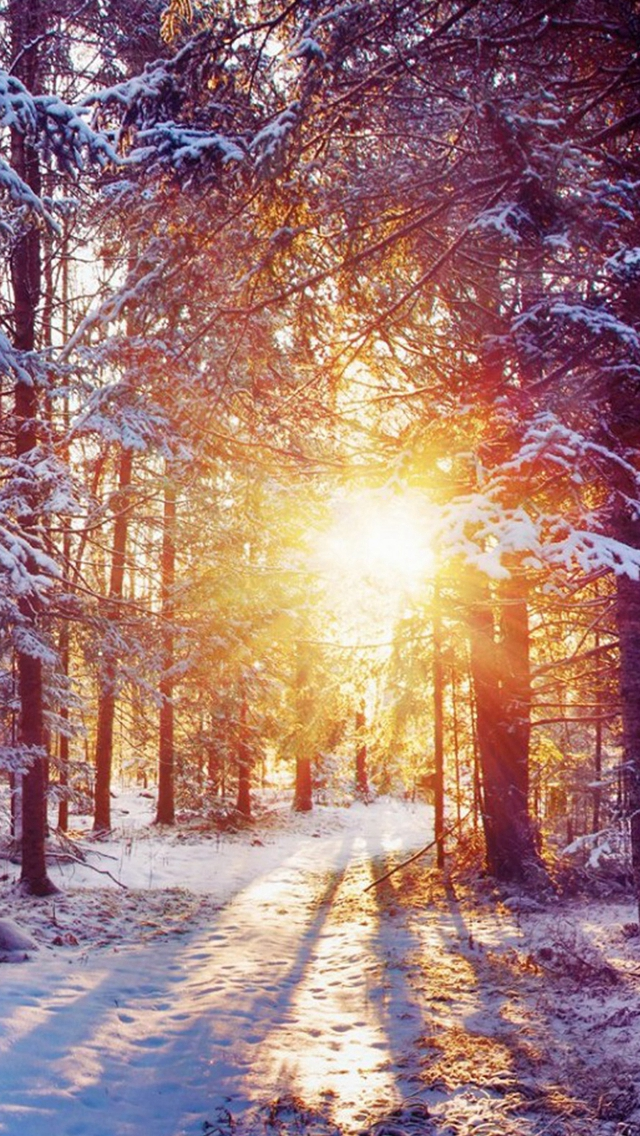 Winter Forest Dawn Landscape iPhone wallpaper
