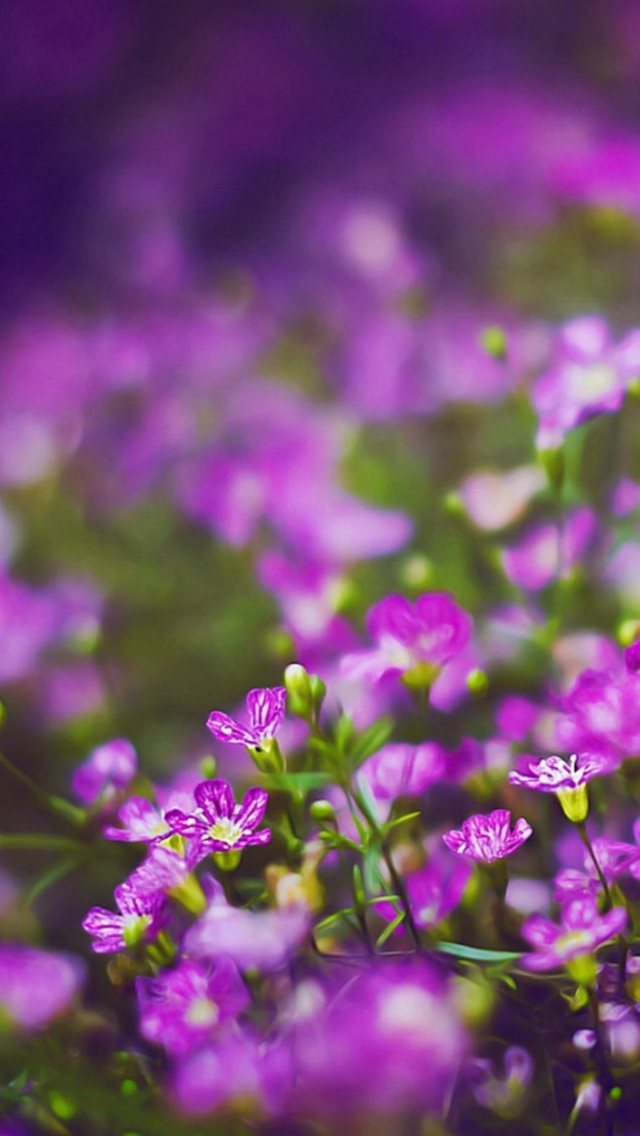 Nature Purple Little Flower Garden Field Bokeh iPhone wallpaper