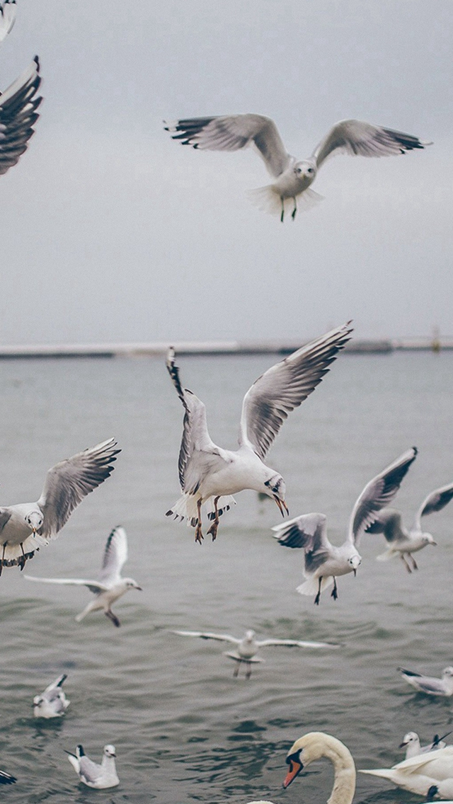 Seagull Sea Beach Port Nature Animal iPhone wallpaper