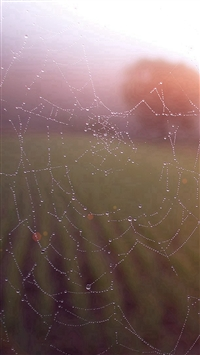 Morning Dew Spider Web Rain Water Nature Flare iPhone 5s wallpaper