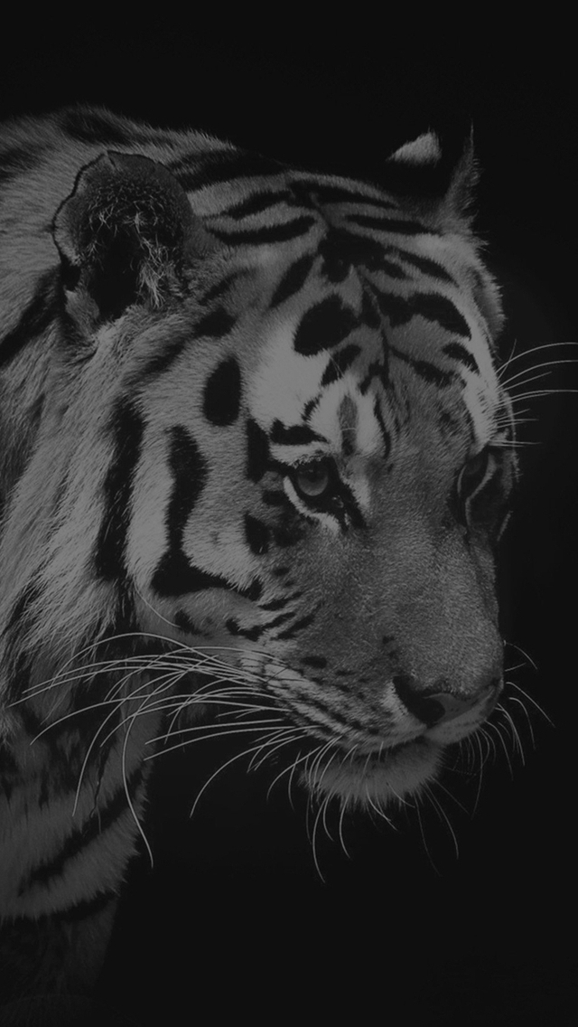 Tiger Dark Animal Love Nature Iphone Wallpapers Free Download