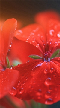 Spring Flower Party Red Nature Flare iPhone 5s wallpaper