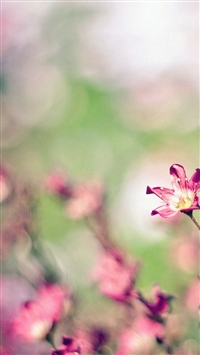 Nature Field Pink Flowers Bokeh iPhone 5s wallpaper