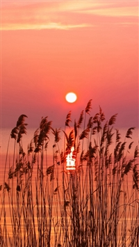 Very holding Sunset  Weed River iPhone 5s wallpaper