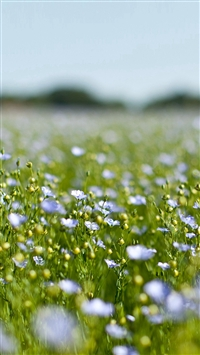 Field Green Cosmos Flower Spring Nature iPhone 5s wallpaper