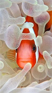 Hidden Fish Coral Reef iPhone 5s wallpaper