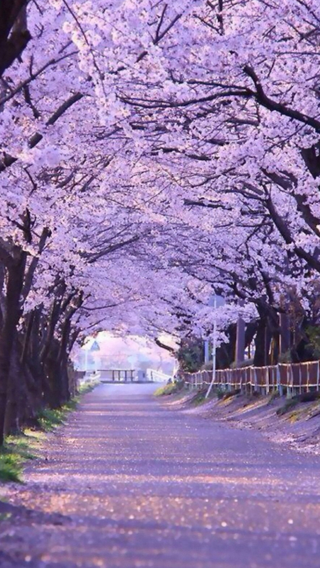 Sakura Blossom Street iPhone wallpaper