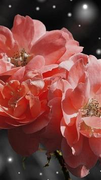 Flower Pink Snow Nature Art iPhone 5s wallpaper