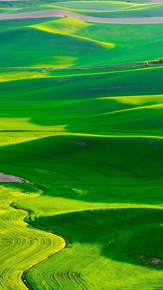 Nature Spring Fresn Grassland iPhone wallpaper