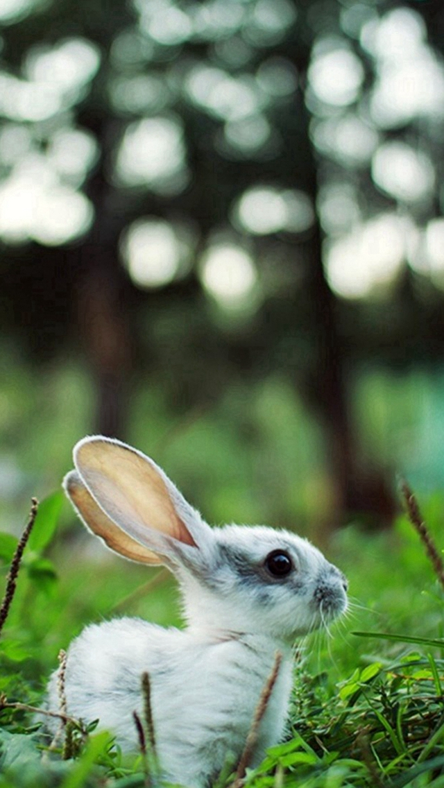 Little Rabbit Grassland Woods Bokeh iPhone wallpaper