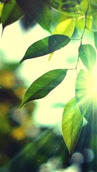 Sunshine Bokeh Leafy iPhone 5s wallpaper